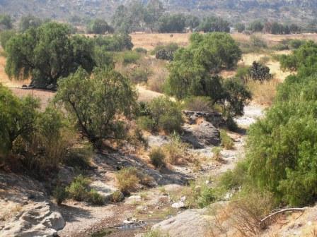 396 - Rehabilitation of eroded land in Mexico - Institut de ...